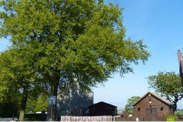 A prominent beech tree in Torphichen is to be felled after the tree was found to be in a state of decay. Icon